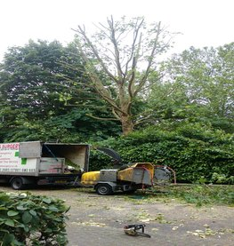 Essex Tree Thinning In London Beckton